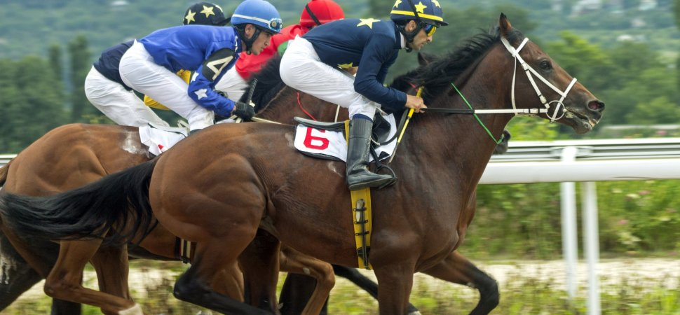 How does Horse Betting work?
